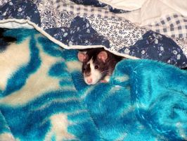Rat in my bed by Nevuela