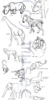Animal Anatomy Concepts by katribou