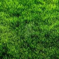 Grass Patch v1 by Lemongraphic
