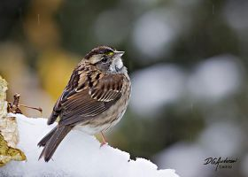 WT Sparrow by DGAnder