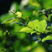 leaf V by interiornoise