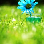 Blue Daisy by incolor16