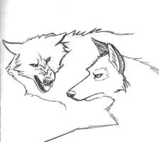 Two Wolves by ltread