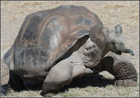 The elephant and the tortoise by fisher57