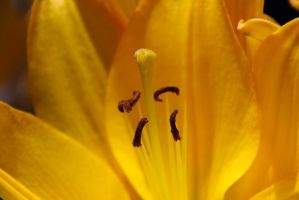 Mellow Yellow by Vividlight