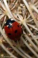 Lady Bug by Cheryl-P