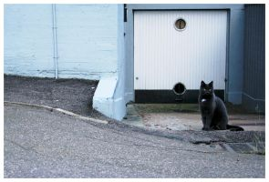 Cat composition II by Kira87