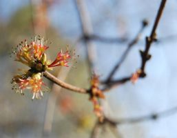 Spring Blossom by Takemybreathaway1191