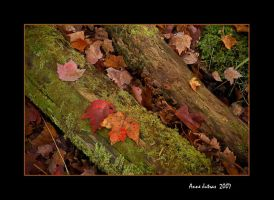 Maple Leaves by Mystik-Rider