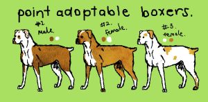 Boxer Adoptables. by bearsleep