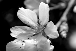 Mourning by Dreamers-Scenery