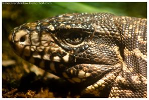 Black and White Tegu 001 by ShineOverShadow