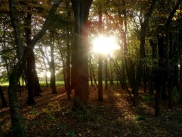 sunset in the forest by Estruda