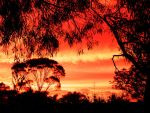 Gum trees by vbdragonfly