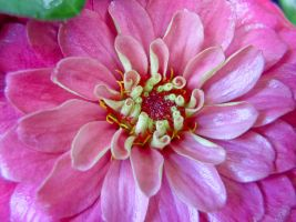 Pink Flower Macro by Retoucher07030