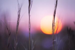 GRASSES by fionafoto