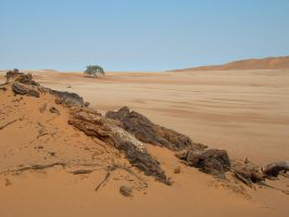 Lone Camelthorn Acacia by Serendith