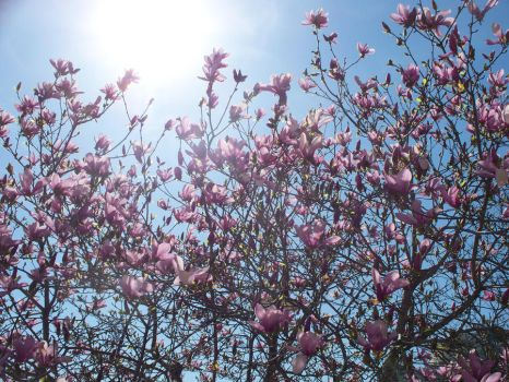 Blossoming by kire89