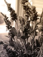 Artificial Lavender - For Dreamers by Feohria