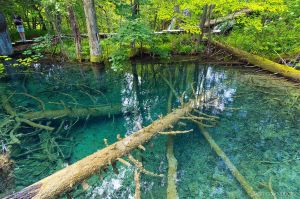 National park Plitvice lakes II by ivancoric