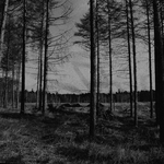 Forest IX by UlfStubbe