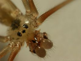 the face of a vibrating spider by webcruiser