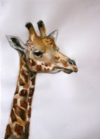 Giraffe by asphaltflowers
