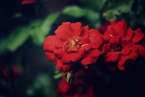 Red II by Sher-Tavi