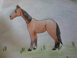Le Horse by AnamayCat