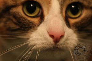 my whiskers are beautiful by jakwak