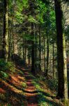 Forest Trail by Aenea-Jones