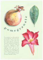pomegranate by kayne