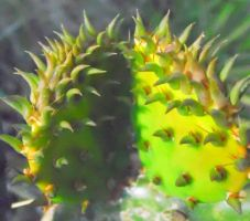 Young Cactus by TheGerm84