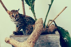 My cat by afifahzahwa