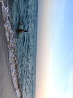 Come Home, Surfer. by Memoret