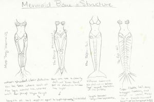 Mermaid Anatomy by psychoviolinist1012