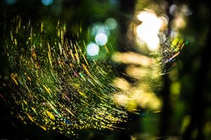 light reflecting off a spiderweb by DanielGliese