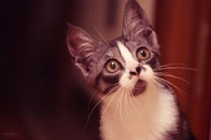 Curious Kitten by Sventine