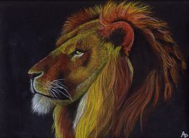 Lion by Alizee-P