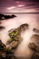 . : nature's pier : . by CoryVarcoe