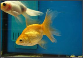 Fish Stock 0036 by phantompanther-stock