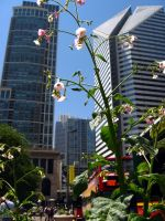 Small Lonely Plant in the Big City by HarleyQuinn2012