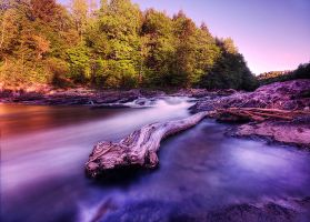 River Snake by IraMustyPhotography