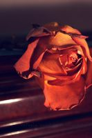 rose is dying by raeuve