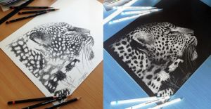 Cheetah inverted pencil drawing by AtomiccircuS