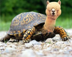 Llama Turtle by Staticpictures