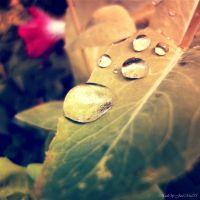 drops by JustMe255
