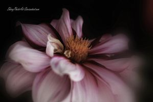Sway with me by ShinyphotoArt