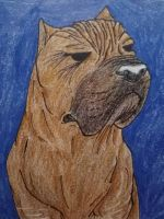 The Boxer - ACEO by ThisDyingDog