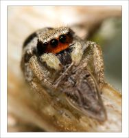 Jumper and Prey 2006  02 by Hatch1921